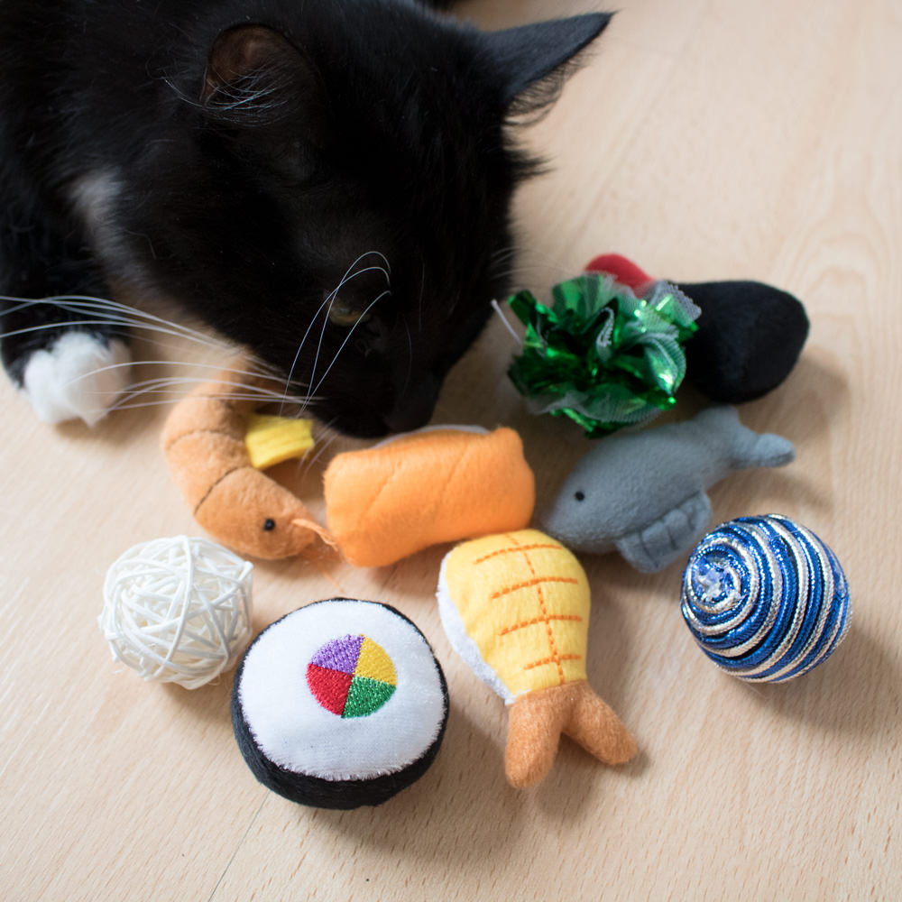 FREE Cat Toy or Treat!